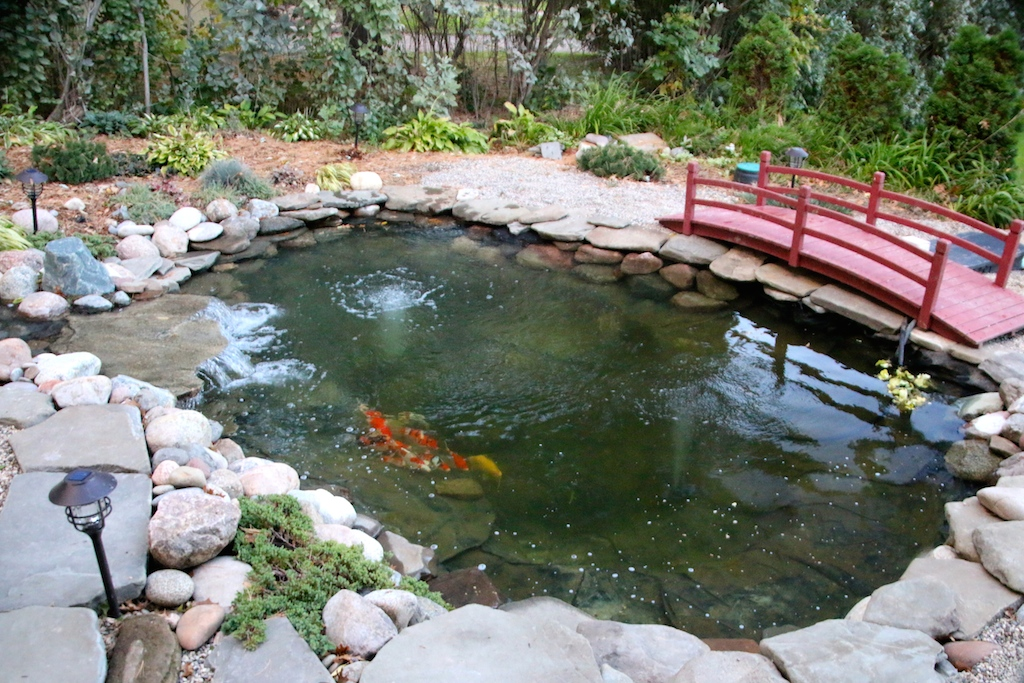 It s really feeling like winter is around the corner for Koi pond in winter