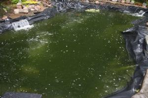 5-24 green pond