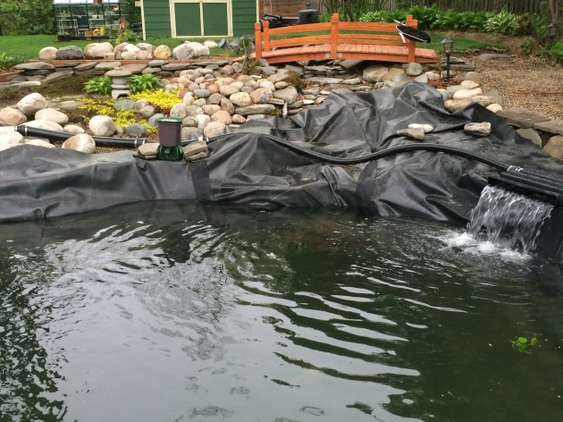 Last year the water came crashing into the pond over the waterfall. This year we're going to try to create a calmer scenario with the use of diffusers. We also have an automatic koi feeder going but I think it's dropping out too much food.