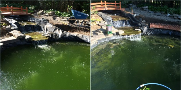 June 20 and June 23 - pond difference with UV light