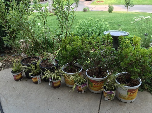 Some plants that will go into the lower pond garden - azaleas, pussy willows and japanese forest grass.