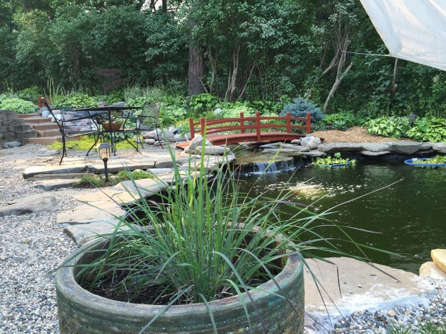 We just put up a sail over the lower pond because the pond is still a little green. Hopefully the shade will help the filtration system get ahead of the algae. The tosai in this pond are growing quickly and at times swim around like maniacs. No one has been found in the skimmer lately :-)