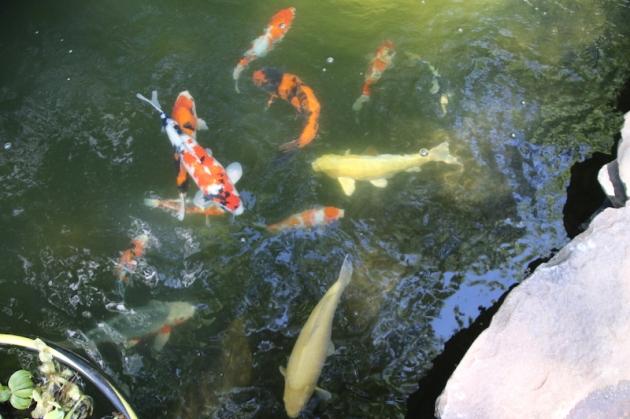 7-17-2015  upper pond