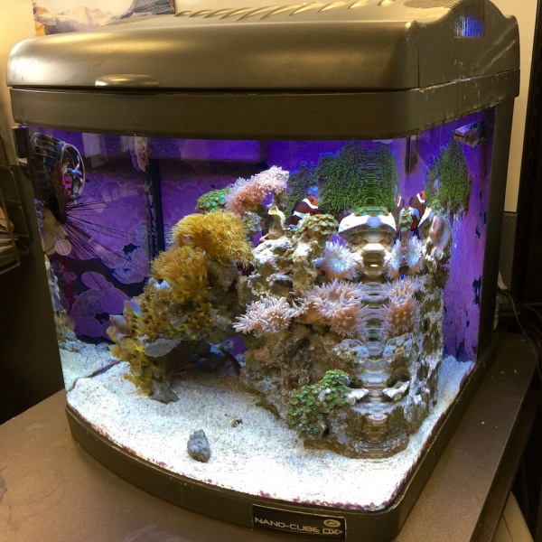 Here is Bridget's saltwater aquarium - compact, beautiful and easy to maintain. The nice thing about saltwater aquariums is that the office does not smell like a giant traditional aquarium - Maybe I should put this on my Christmas list this year???