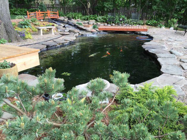 Happy koi in the upper pond