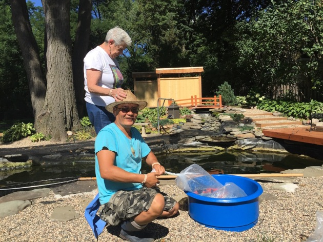 Here's my friend, Michael Chang, UMKC koi club member and Barb Flowers (part of the show scoring team) helping us get our koi to the show.  Michael's koi won many awards including Grand Champion A (top award).
