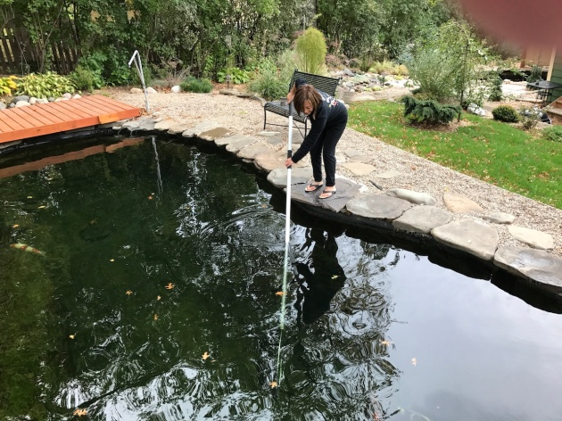 trying to net the koi - not doing a good job