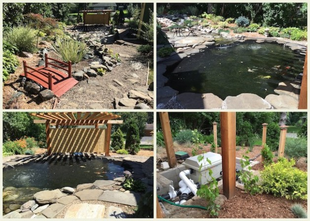 The lower pond in 2016. We added a shade structure since this area gets a lot of sun. The pond supports a waterfall that loops back into the pond.