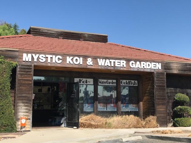 mnkoilady, koi, koi pond, Minnesota, Mystic Koi, Shawn McHenry, dealer