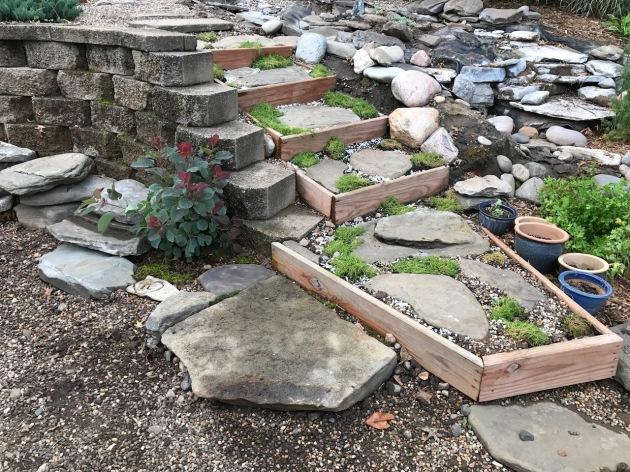 koi, koi pond, landscaping, Irish moss, Minnesota, mnkoilday