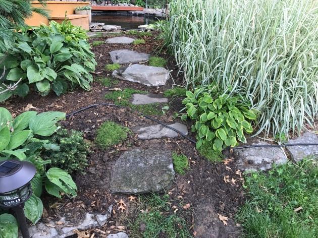 Irish moss, Minnesota , koi pond, landscaping, mnkoilady