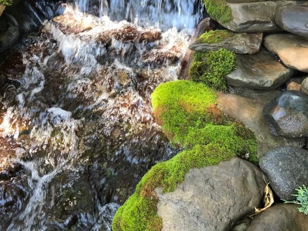 moss, koi, koi pond, Minnesota, mnkoilady, landscaping, waterfall