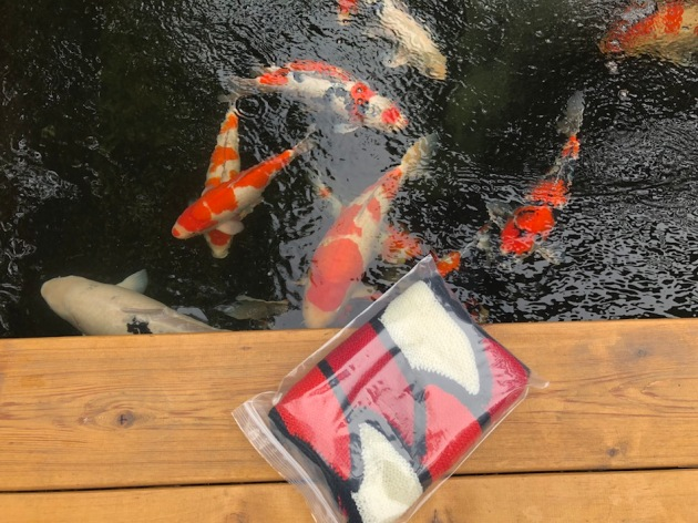 I was showing the pond builder today a new scarf that my sister made for annual koi show. Very lightweight and she found two tones of red similar to the koi.